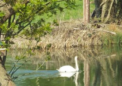 Wildlife on the fishing lake at Seven Acre Farm
